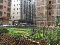 惠东县平山黄排花园街附近3间门面地皮出售